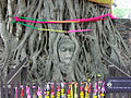 Buddha head in a tree b133.jpg