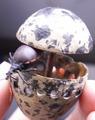 Bug in dummy-egg.tif