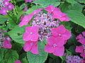 Buisson de fleurs mauves.jpg