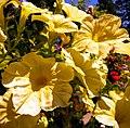 Butchart Gardens - Victoria, British Columbia, Canada (29184834681).jpg