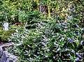 Butchart Gardens - Victoria, British Columbia, Canada (29378066505).jpg