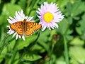 Butterfly (0585d63234bc4671a2fee841cd8de0c7).JPG