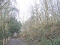 Byway through Ashenbank Wood - geograph.org.uk - 323177.jpg