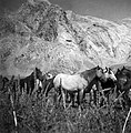 CH-NB - Persien, Elburs-Gebirge (Elburz)- Pferde - Annemarie Schwarzenbach - SLA-Schwarzenbach-A-5-06-169.jpg