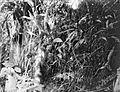 COLLECTIE TROPENMUSEUM Bekerplant Nepenthaceae TMnr 10006237.jpg