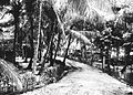 COLLECTIE TROPENMUSEUM Straatgezicht met palmen TMnr 60018673.jpg