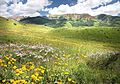 CRESTED BUTTE(7-22-20150 North of Crested Butte, Gunnison Co, CO (3) (20578582831).jpg