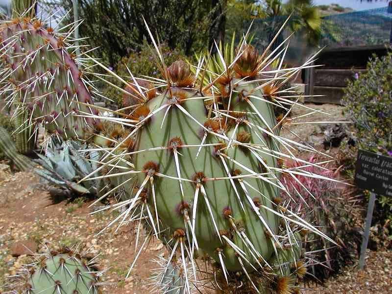 Cactus1web