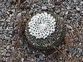 Cactus 15.jpg