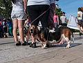 Caminata por los perros y animales Maracaibo 2012 (44).jpg