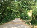 Camino Edo. Carabobo.JPG