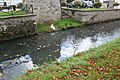 Canards cygnes nord canal Crécy Chapelle 2.jpg