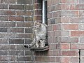 Cat (33168036986).jpg