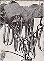 Catalog - spring 1950 (1950) (20550011096).jpg