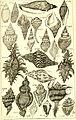 Catalogue systématique et raisonné, ou, Description du magnifique cabinet appartenant ci-devant à M. le c. de *** - ouvrage intéressant pour les naturalistes, and pour les amateurs de l'histoire (14761768821).jpg