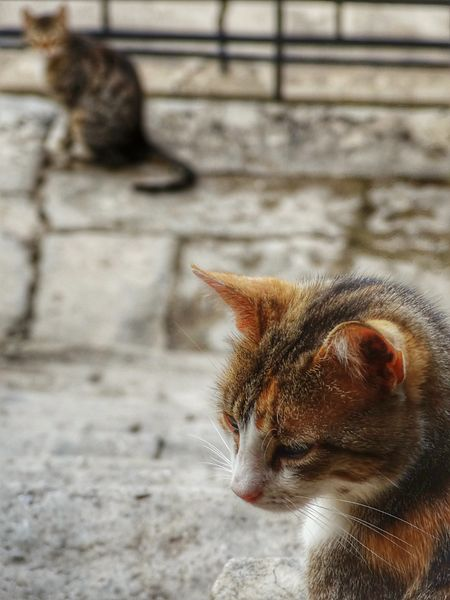 File:Cats of Moni Arkadi -) (14075379976).jpg