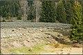 Cattle of Elk in GrandTeton NP (3632927206).jpg