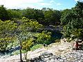 Cenote Xlacah - P1110794.JPG