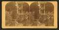 Century plant in bloom. Florida, from Robert N. Dennis collection of stereoscopic views.png