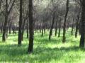 Cerro de los Ángeles en primavera.jpg