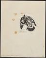 Ceryle varia - 1820-1863 - Print - Iconographia Zoologica - Special Collections University of Amsterdam - UBA01 IZ16800245.tif