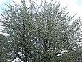 Chamonix by eGuide (5017341087).jpg