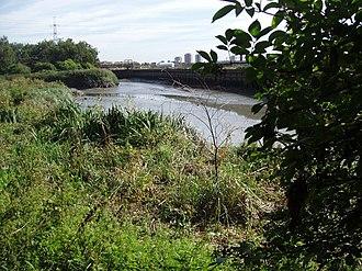 Channelsea River - Channelsea River near Mill Meads in 2005