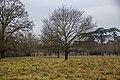 Charlecote Park 2017 001.jpg