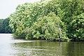 Charles River - panoramio (2).jpg