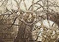 Charter Oak 1855 3.jpg