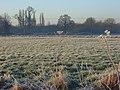 Charvil Meadows - geograph.org.uk - 695694.jpg