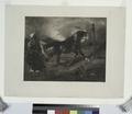Cheval arabe au piquet, d'après Delacroix (NYPL b14669009-1153161).tiff