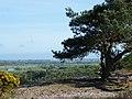 Christchurch District, UK - panoramio - Sławomir Hutryk (1).jpg