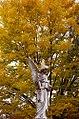 "Cincinnati – Spring Grove Cemetery & Arboretum ""Autumn Angle"" (15781178682).jpg"