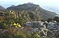 Ciudad del Cabo, Table Mountain 03.jpg