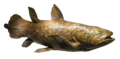 Coelacanth model, Devonian - Houston Museum of Natural Science - DSC01709 (white background).png