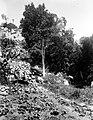 Collectie Nationaal Museum van Wereldculturen TM-10021339 Vegetatie onder aan een berghelling van enkele bomen en planten Saba -Nederlandse Antillen fotograaf niet bekend.jpg