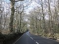 Colley Lane enters Haldon Forest - geograph.org.uk - 1716308.jpg