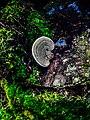 Color affected wild mushroom.jpg
