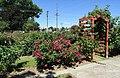 Commemorative Garden (42284692955).jpg