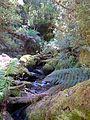 Cool Temperate Rainforest (Growling Swallet, Tasmania).jpg