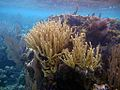 Coral Reefscape (5295156383).jpg