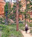 Cowgirl on Bryce Canyon Trail 9-09 (15811618796).jpg