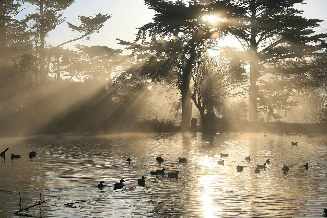 Rais de lumière crépusculaire sur le lac Stow, dans le parc du Golden Gate, à San Francisco. Sur la gauche, on voit des rayons provenant du lac.  (définition réelle 2400×1600)