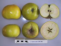 Cross section of Ponyik Alma, National Fruit Collection (acc. 1948-398).jpg