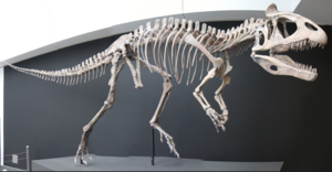 Cryolophosaurus - Reconstructed skeleton, Ultimate Dinosaur exhibit, Vancouver
