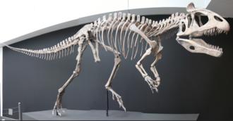 Cryolophosaurus - Reconstructed skeleton, Ultimate Dinosaur exhibit, Vancouver