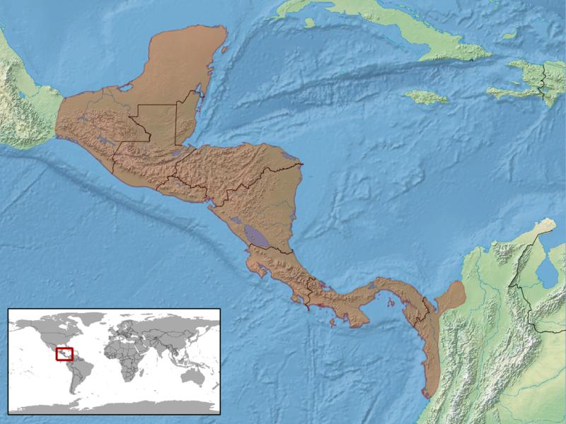 Ctenosaura similis distribution.png