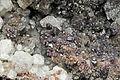 Cuprite, cérusite 300-4-2011.JPG