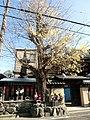 Daisho-ji no Icho.JPG